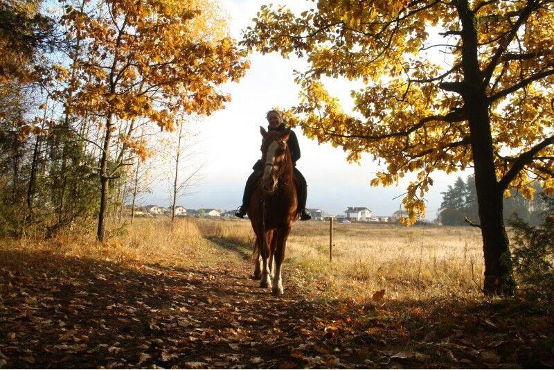 Jodinėjimas žirgais šeimai Rygos apylinkėse