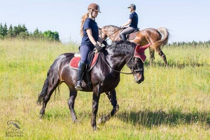 Pasijodinėjimas žirgu Riešėje (1-3 asmenims)