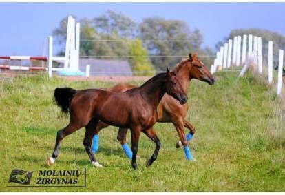 Žygis žirgais po Panevėžio apylinkes dviem