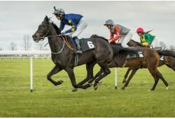 Žirgų lenktynių stebėjimas dviem