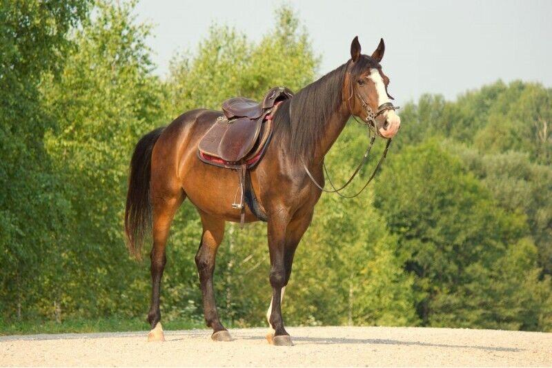 Pažintis su žirgais ir pasijodinėjimas dviem Alytuje