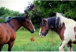 Jodinėjimas žirgais Kaune dviem