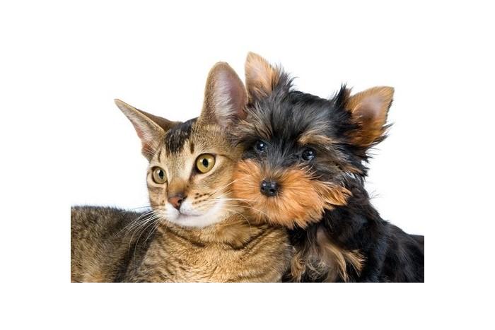 Profilaktinio sveikatos patikrinimo programa šunims ir katėms