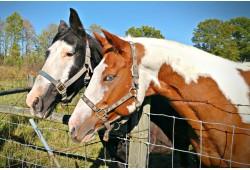 Aktyvi diena šeimai su jodinėjimu žirgais ir vandens pramogomis dviem Trakuose