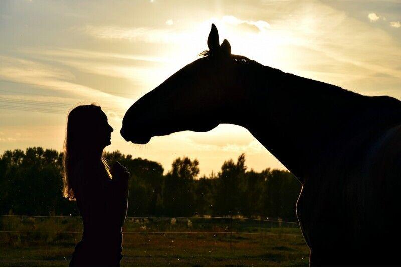 Jodinėjimas žirgais + fotosesija dviem Rygos apylinkėse