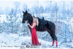 Fotosesija su žirgu Panevežyje