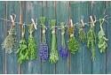Anykštietiškų vaistažolių mišinių degustacija