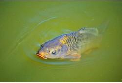 """Žvejyba ir laimikio paruošimas sodyboje """"Karpynė"""" dviem"""