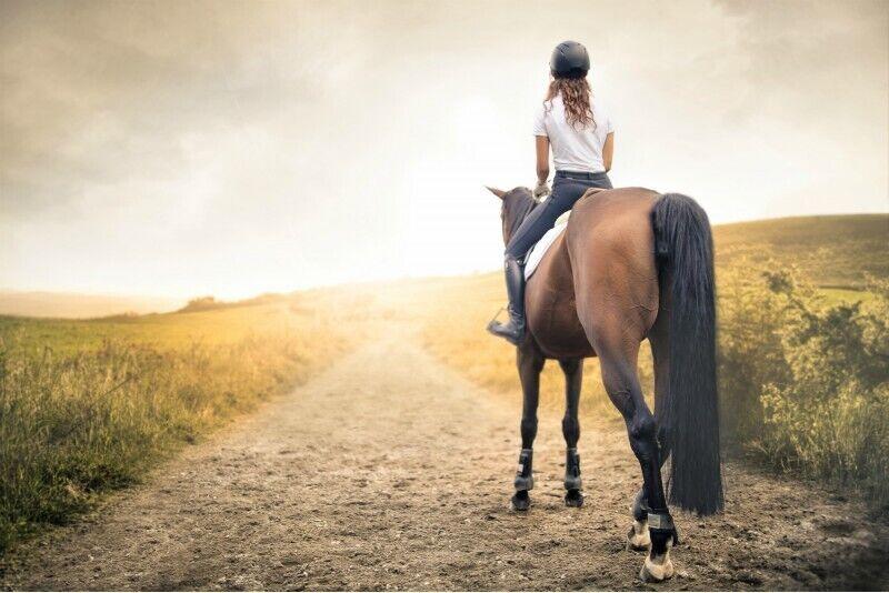 Pasijodinėjimas žirgu po Anykščių apylinkes