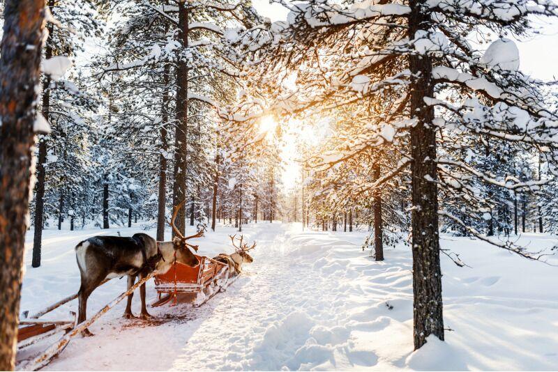 """Kelionė su """"Interlux Travel""""  į Laplandiją su ekskursijom"""