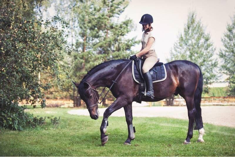 Jodinėjimas žirgais aikštelėje arba manieže 2 asmenims