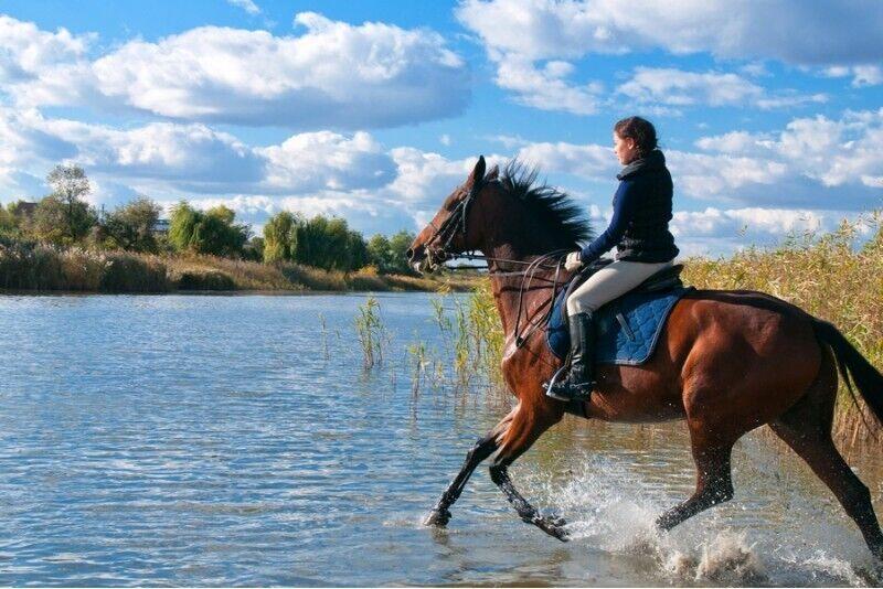 Jodinėjimas žirgais Kauno marių pakrante