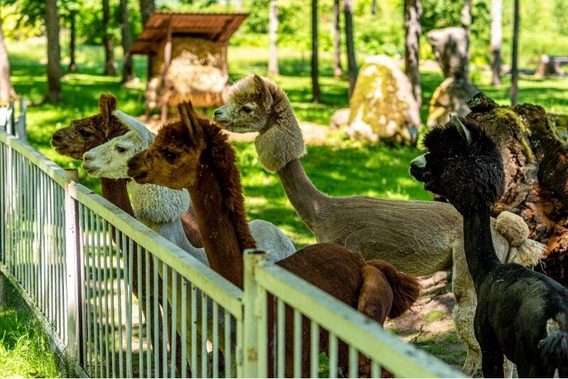 """Apsilankymas """"Taujėnų dvaro"""" parke ir Zoo sode"""