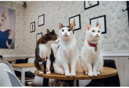 """Apsilankymas kačių kavinėje """"Cat Cafe"""" Vilniuje"""